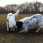 Juno en Blestya